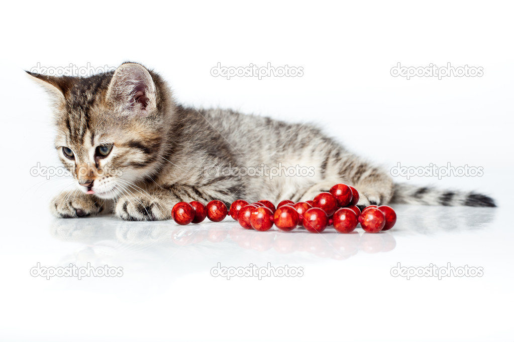 Adorable kitten with red beads white background  Stock Photo #5803417