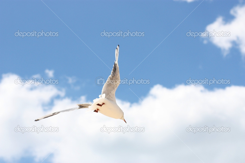 Flight of a seagull against the blue sky and clouds. — Stock Photo #6378528