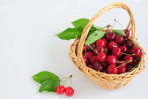 Cherries in a basket — Stockfoto