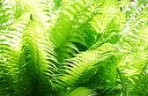 新鮮な緑の葉 — ストック写真