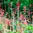 Stock Photo: Wild Little Pink Flowers