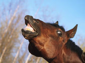 Horse with a sense of humor — Stock Photo