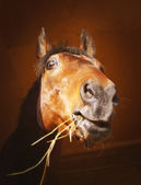 Portrait of horse with a sense of humor — Stock Photo
