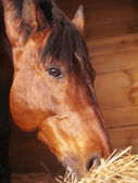 Портрет есть лошади в потерять бокс — Стоковое фото