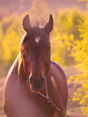 Horse in beautiful meadow — Stock Photo