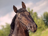 Portrait of black horse at dramatic sky — Stock Photo