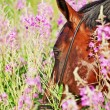 Stock Photo: Portrait of amazing bay horse in blossom closeup