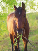 Pretty bay horse with leaves in spring season — Stock Photo