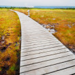 Stock Photo: Boardwalk in Gros Morne Park