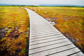 Boardwalk in Gros Morne Park — Stock Photo