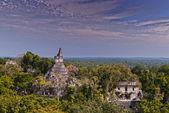 Tikal Ruins — ストック写真