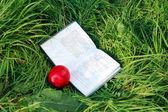 Kniha a nektarinek se na zelené trávě — Stock fotografie