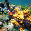 Colorful sea sponges - Stock Photo