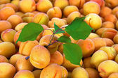 Apricots at a farmers market — Stock Photo