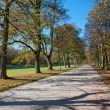 Walk in the park — Stock Photo #5631546