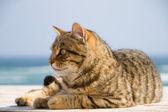 Tomcat on beach. — Stock Photo