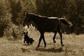 Cavallo e cane — Foto Stock