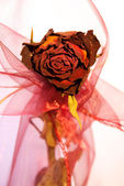 Beautiful dry red rose from front — Stock Photo