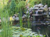 Ornamental pond — Stock Photo