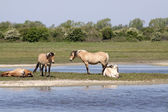 Horses on an Island — Stock Photo