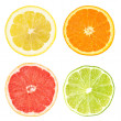 Citrus slices — Foto de Stock