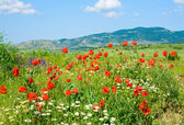 Beautiful summer mountain landscape with flowers . — Stock Photo