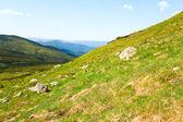 Flores na montanha de verão — Foto Stock