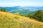Summer mountain country landscape — Stock Photo