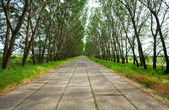 Summer concrete road — Stock Photo