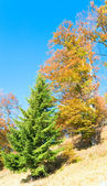 Autumn colorful trees on mountainside — Stock Photo