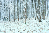First winter snow and last autumn leafs in forest — Stock Photo