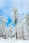 Snowbound winter earthroad — Stockfoto