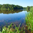Summer rushy lake — Stock Photo #6156267