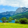 Alpine summer lake view — Stock Photo #6156575
