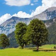 Alps summer view — Stock Photo #6156621