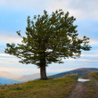 Lonely tree in autumn mountain — Stock Photo #6181401