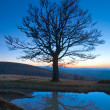Lonely autumn naked tree on night mountain hill top — Stock Photo #6181610