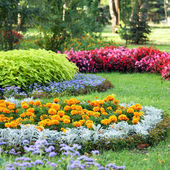 Flower landscaping — Stock Photo