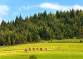 Haystacks alanlarla yaz — Stok fotoğraf