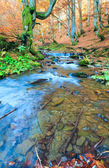 Rocky Autumn Stream — Stock Photo