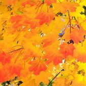 Autumn gold — Stock Photo