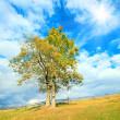 Lonely autumn tree on sky background. — Foto de Stock