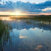 Summer rushy Lake sunset view — Stock Photo