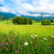 Alps meadow summer view — Stock Photo