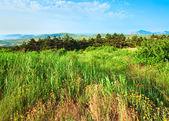 Vista nebbiosa costa estate — Foto Stock