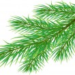 Royalty-Free Stock Vector: Pine Twig