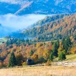 Autumn misty morning mountain valley - Stock Photo