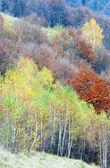 Herfst bergbos — Stockfoto