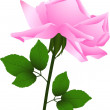 Royalty-Free Stock Imagen vectorial: Rose flower