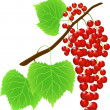 red currant — Stock Vector